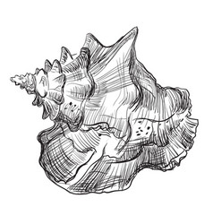 Hand drawing seashell-13 vector
