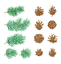 High detailed pine cones and branches with needles vector