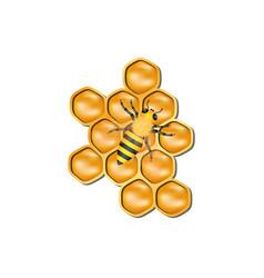 bee honeycomb with honey bee vector image vector image