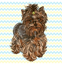 Puppy yorkshire terrier vector