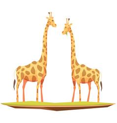 Giraffes couple animals composition vector