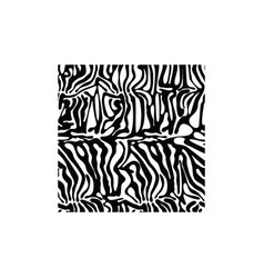 Zebra square texture fabric style for tattoo vector