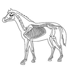 Horse skeleton vector