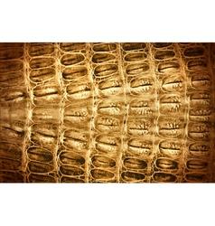 Crocodile leather background vector image