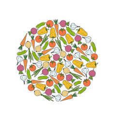 Round from vegetables carrot garlic onion beet vector