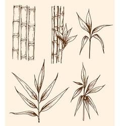 Set of hand drawn vintage bamboo vector image vector image