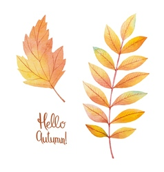 Watercolor autumn leaves vector image