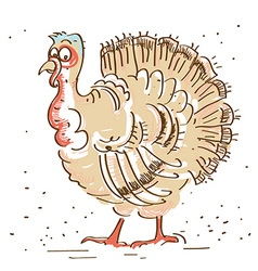 Thanksgiving turkey isolated on white vector image