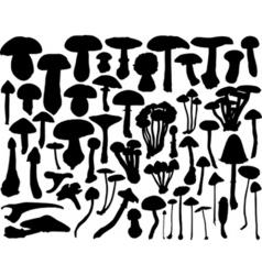 fungi vector image