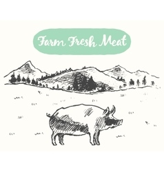 Drawn pig meadow farm fresh products sketch vector
