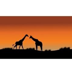 Silhouette of two giraffe in fields vector
