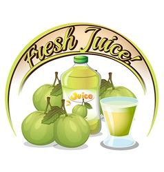 Fresh juice label with guavas vector