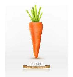 Carrot isolated on a white background vector