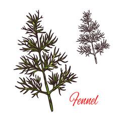Fennel seasoning plant sketch plant icon vector