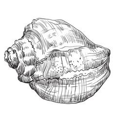 Hand drawing seashell-14 vector