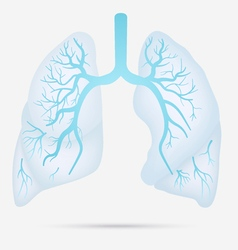 Human lungs anatomy for asthma tuberculosis vector