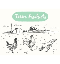 Drawn range chicken farm fresh meat sketch vector