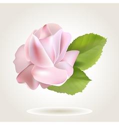 rose big vector image
