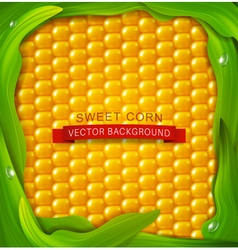 background Yellow corn green leaves around vector image