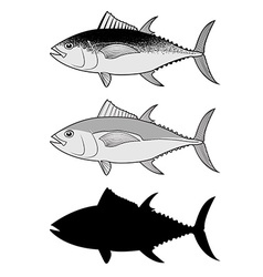 Set of the tuna in vector