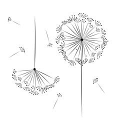 Dandelion flower for your design vector