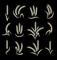 Golden wheat ears on black background vector