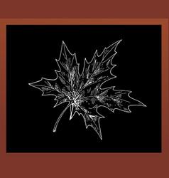 black school chalkboard with a maple leaf drawn vector image