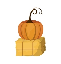 Pumpkin and hay of thanksgiving vector