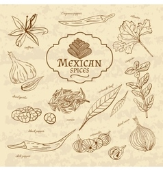 Set of spices and herbs cuisines of the world vector