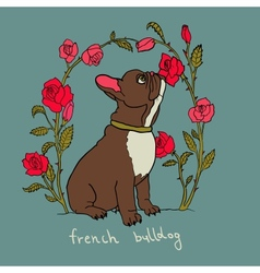 French bulldog with roses vector image vector image