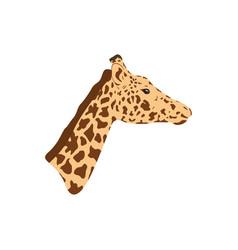 Giraffe head and neck vector