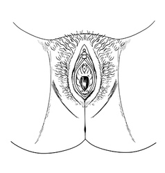 Human female genitalia outline external vector
