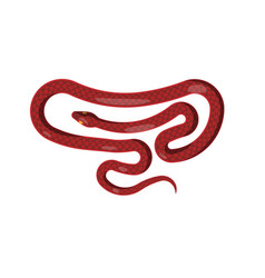 red snake isolated cartoon reptile vector image