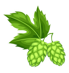 green hops with leaf for oktoberfest vector image