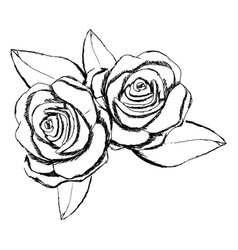 Monochrome sketch with pair of roses with leaves vector