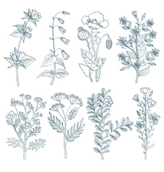 Herbs wild flowers botanical medicinal organic vector image vector image