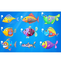 A sea with a school of colourful fishes vector image