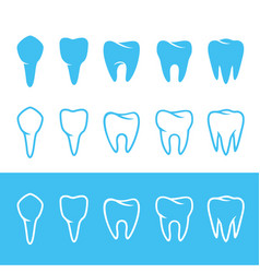 human dentition teeth vector image