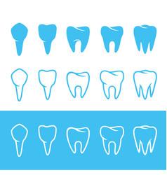 human dentition teeth vector image vector image