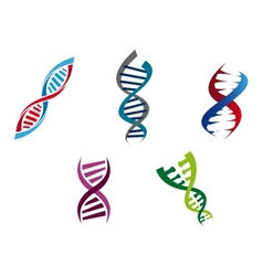 Colourful dna strands vector