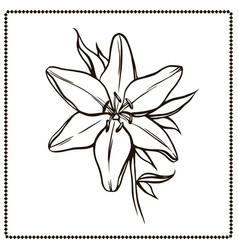 Beautiful lily flower closeup vector