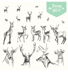 Set hand drawn deers vintage sketch vector