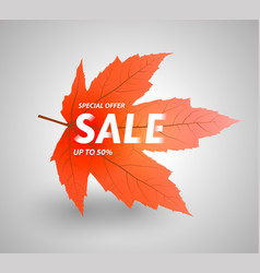 Autumn sale up to 50 percent vector