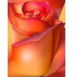 Orange rose macro eps 10 vector