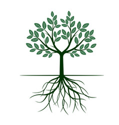 Green tree with leafs and roots vector