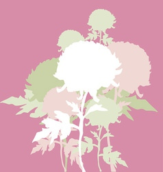 peon flowers vector image