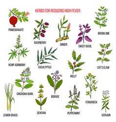 best herbal remedies for reducing high fever vector image vector image