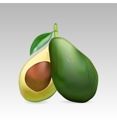 Avocado fruit whole and in section vector