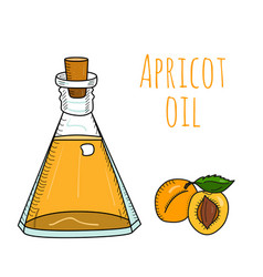 Colorful hand drawn apricot oil bottle vector