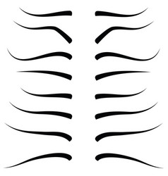 set of eyebrow collection vector image vector image